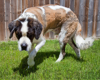 IMG 3878 